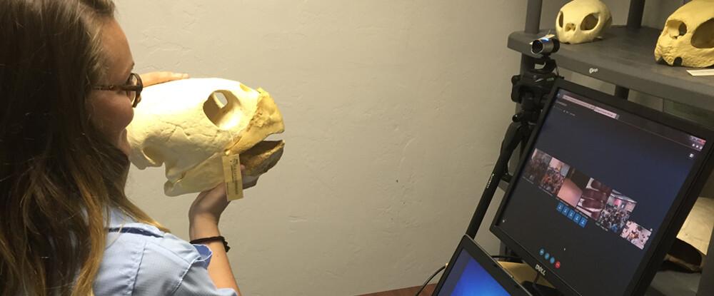 Maestros: programar una llamada de vídeo de tortugas marinas para su clase