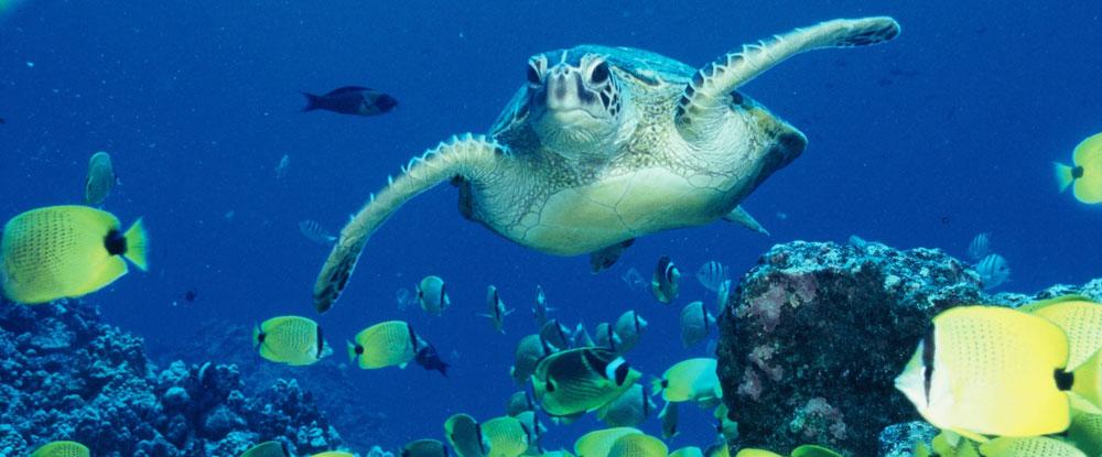 Adopta una tortuga como regalo de vacaciones
