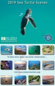 Get Involved – Sea Turtle Conservancy