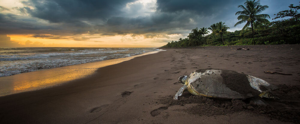 Take Part in one of STC's Eco-Volunteer Programs and get Hands-on With Sea Turtles