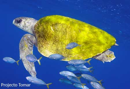 Information About Sea Turtles Species Of The World Sea Turtle