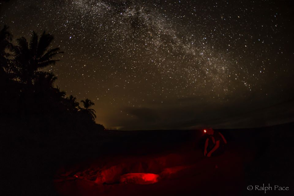 Gathering sea turtle data under a beautiful night sky. Photo by Ralph Pace