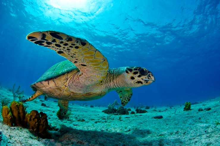 Image result for turtle conservation bahamas